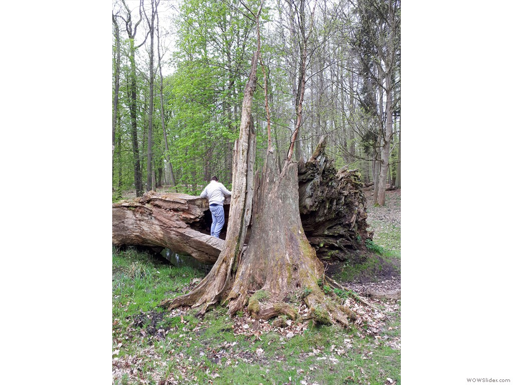Justin untersucht die Reste dieses Baumes